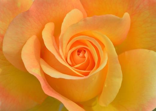 flower-3063414_1920