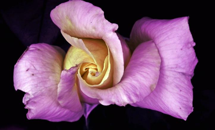 flower-3101480_1920