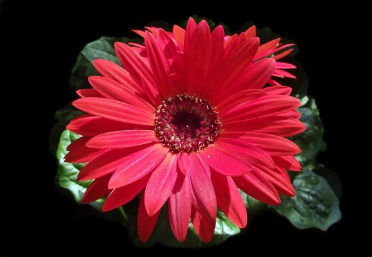 flower-3110015_1920